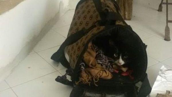 Lola, la prima gattina migrante