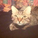 Romeo e del perché non si può vivere senza un gatto (o un cane)
