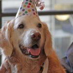 Bretagne, l'ultimo cane eroe dell'11 settembre