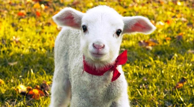 Enpa, a Pasqua regala un gattino (e non mangiare l'agnellino)