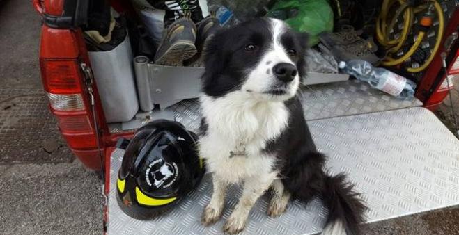 Addio a Camilla, coraggiosa cane-pompiere