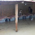 «Aiutateci!» L'appello di Save the dogs dopo l'alluvione