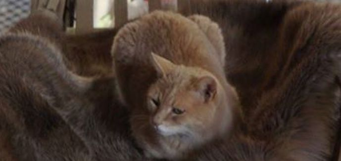 addio gatto stubbs