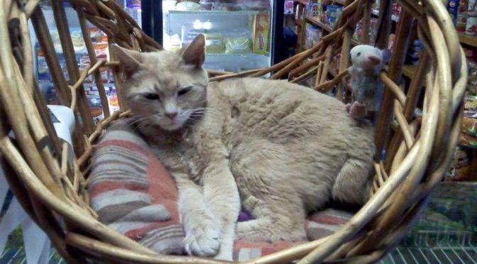 Stubbs, gatto sindaco di una città stufa dei soliti politici
