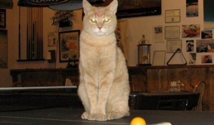cat stubbs gatto