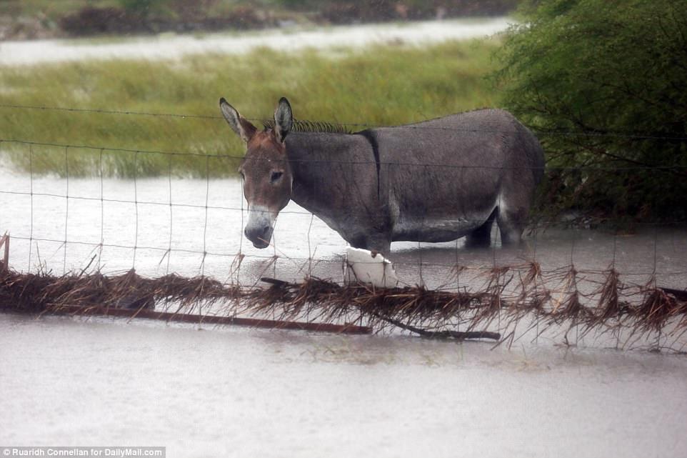 asino alluvione texas