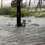 Anche gli animali vittime dell'uragano Harvey in Texas