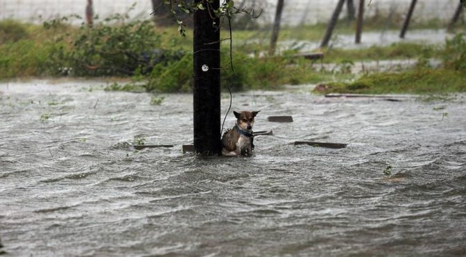 cane uragano Harvey vitoria texas