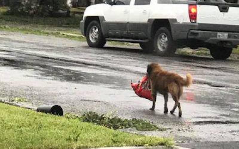 cane otis texas alluvione