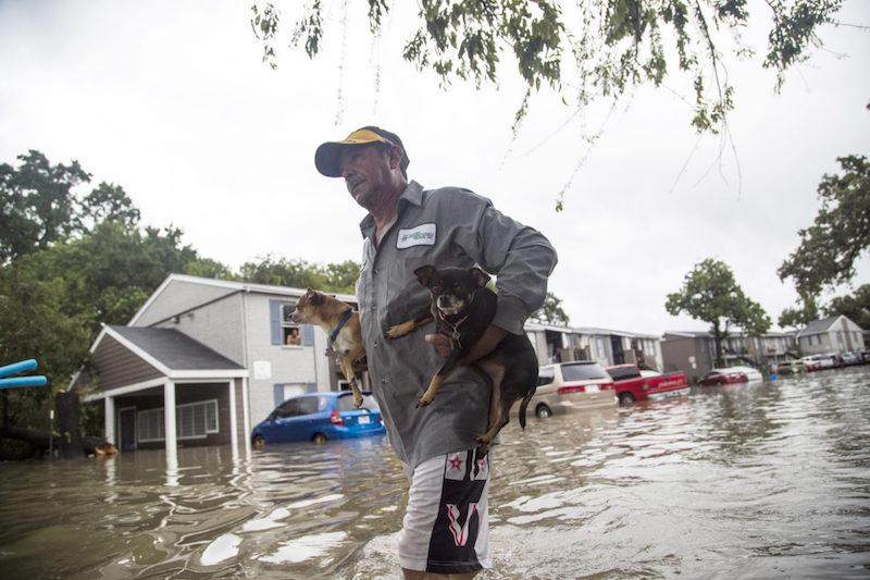 cani alluvione texas
