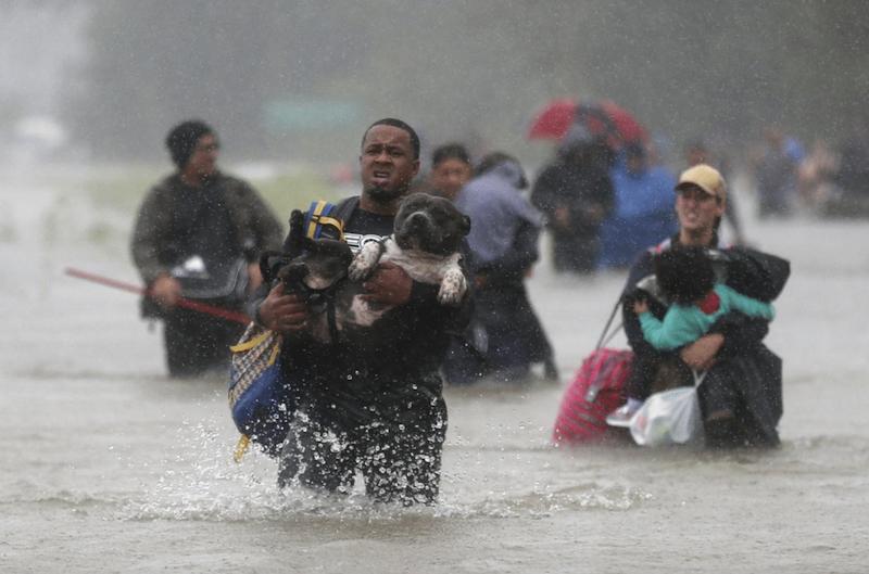 cucciolo-uragano texas