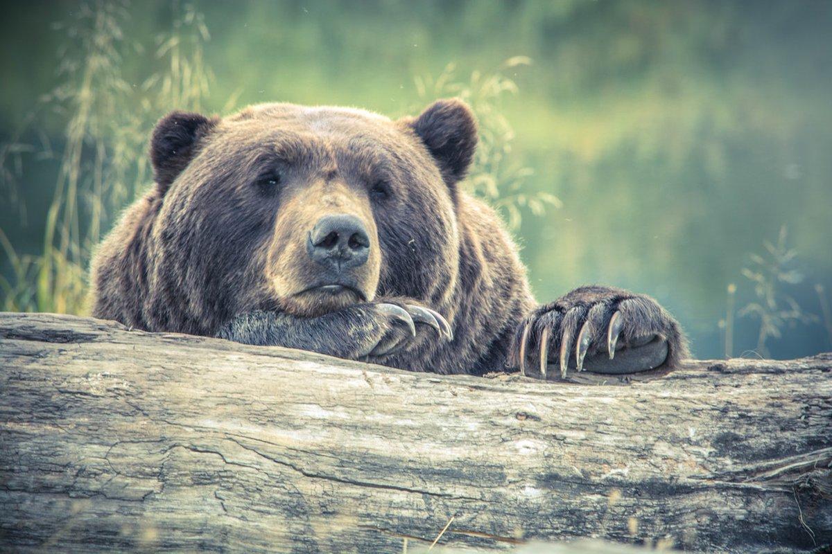 orsa trentino