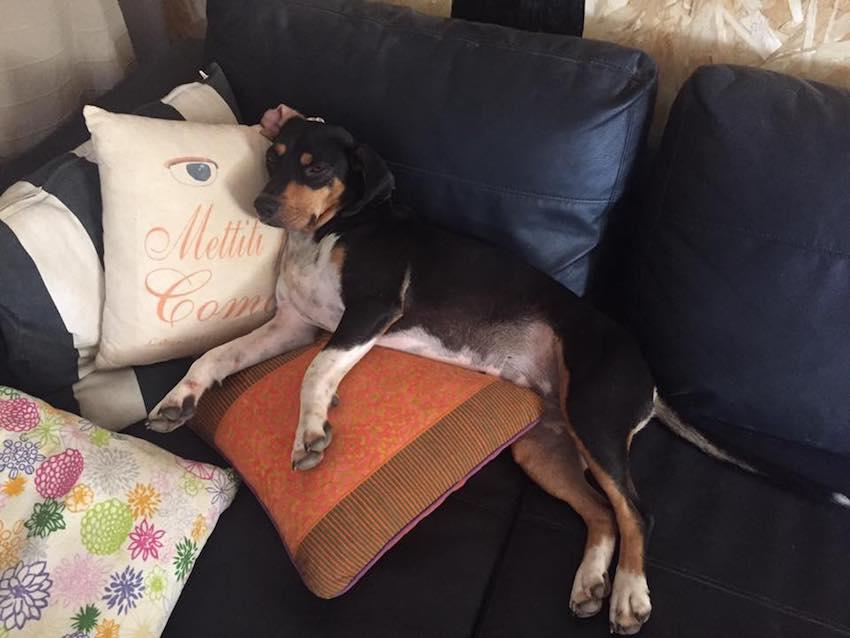 cane lampedusa 1