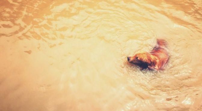 Dai fenicotteri ai delfini, la grande fuga degli animali dall'uragano Irma