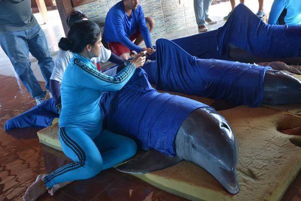 delfini uragano Irma