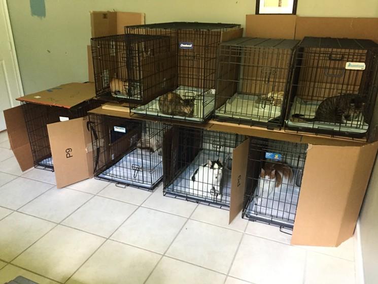 gatti uragano Irma
