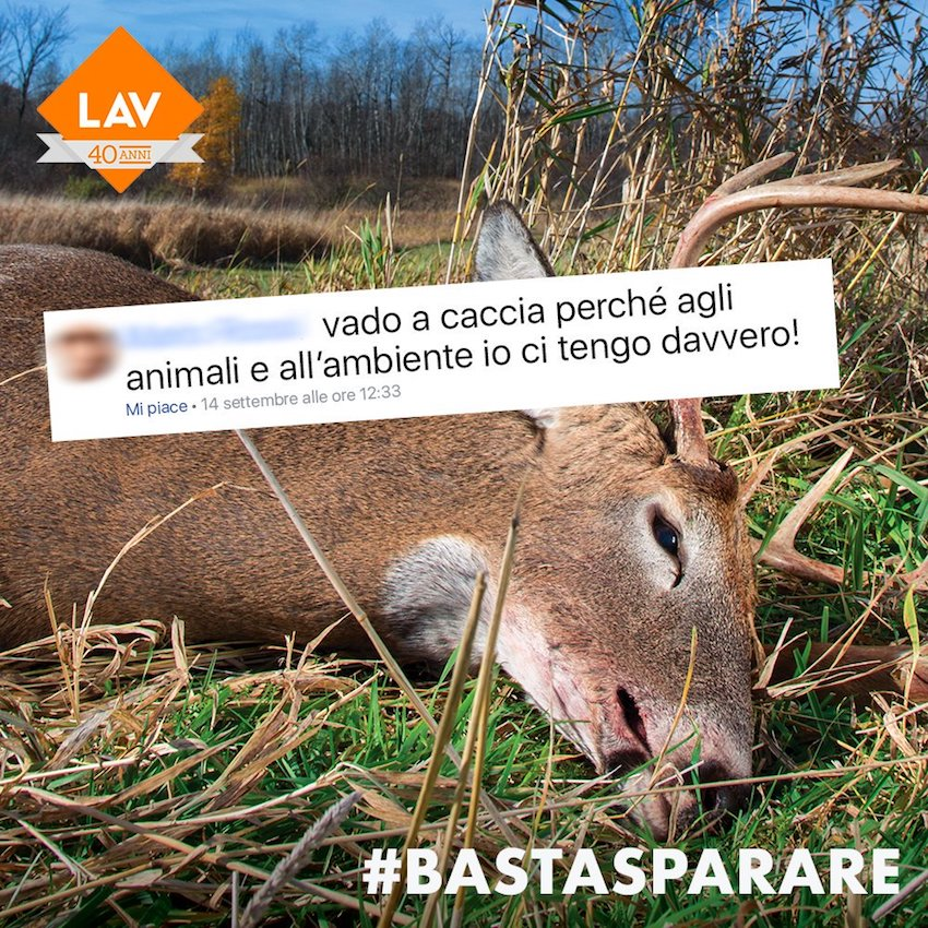 cervo caccia lav volpe caccia lav #bastasparare