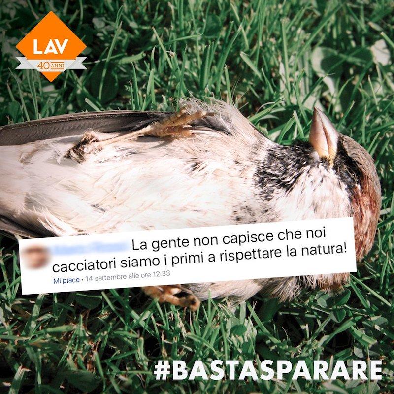 uccello caccia lav cervo caccia lav volpe caccia lav #bastasparare