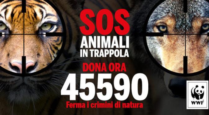 """""""Sos Animali In Trappola"""". Il Wwf chiede aiuto per fermare i crimini di natura"""