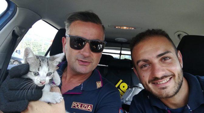 Chi vuole adottare Rombo, micino salvato in autostrada?