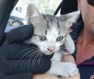 gatto rombo autostrada polizia copia