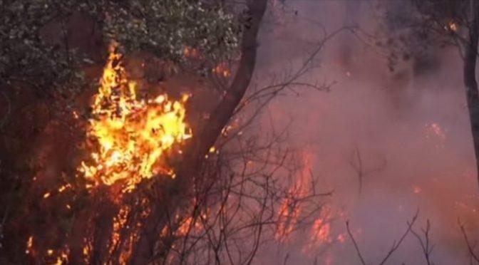 Sardegna, le fiamme uccidono migliaia di animali. L'appello della Duemari di Oristano: aiutateci